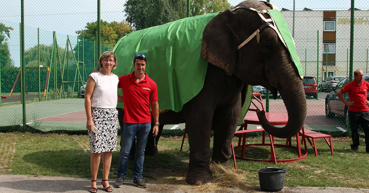 A D-Line esete az elefánttal a Balaton-parton